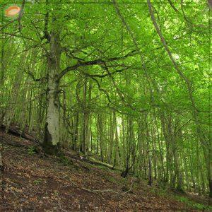 جنگل ۲۰۰۰ تنکابن